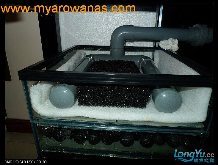 完美龙缸准备-2009-10-1 (更新附件安装 累了) 重庆龙鱼论坛 重庆水族批发市场第32张