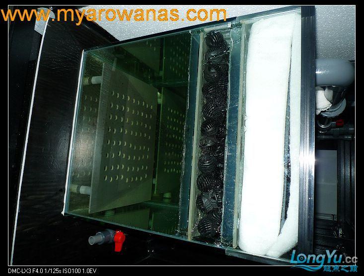 完美龙缸准备-2009-10-1 (更新附件安装 累了) 重庆龙鱼论坛 重庆水族批发市场第33张