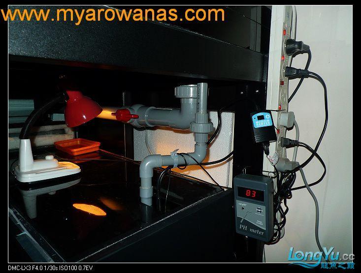 完美龙缸准备-2009-10-1 (更新附件安装 累了) 重庆龙鱼论坛 重庆水族批发市场第22张
