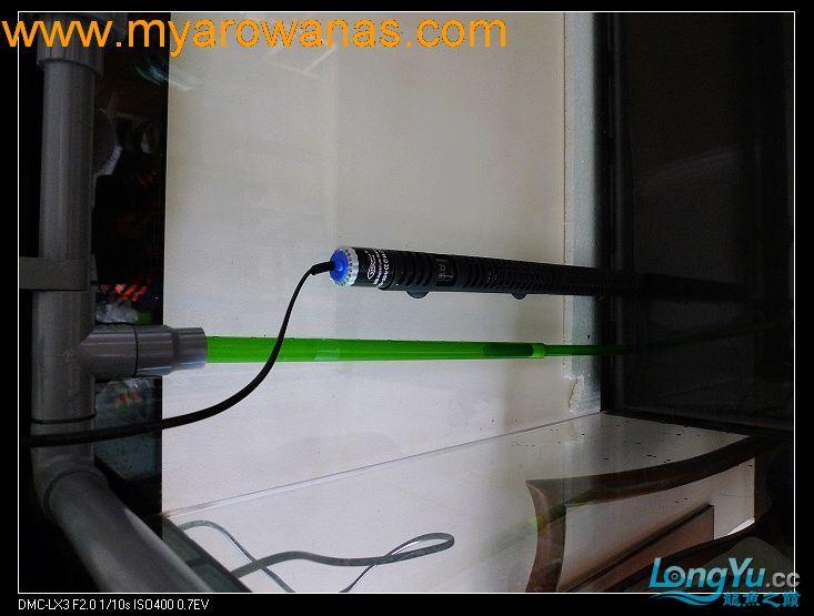 完美龙缸准备-2009-10-1 (更新附件安装 累了) 重庆龙鱼论坛 重庆水族批发市场第19张