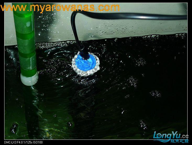 完美龙缸准备-2009-10-1 (更新附件安装 累了) 重庆龙鱼论坛 重庆水族批发市场第20张