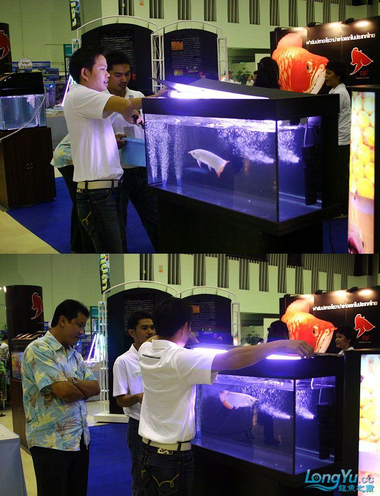 水族展会现场展示龙鱼手术 达州龙鱼论坛 达州水族批发市场第1张