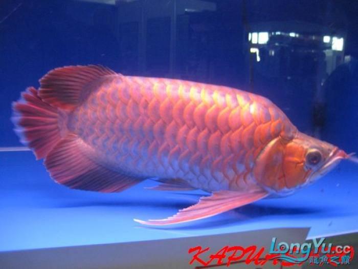 2010 婆罗洲国际红龙大赛