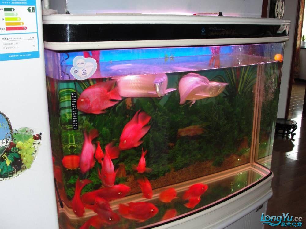 秀秀我的鱼 未命名 吉林龙鱼第1张
