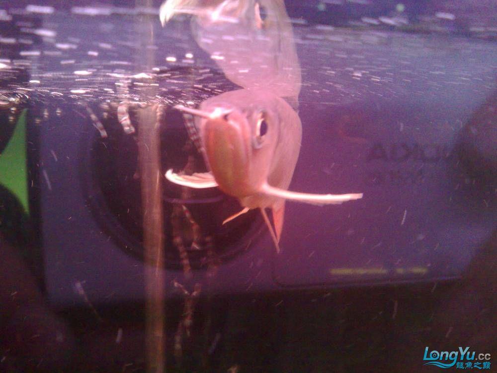 各位帮看一下这是宝石吗? 营口观赏鱼 营口龙鱼第3张