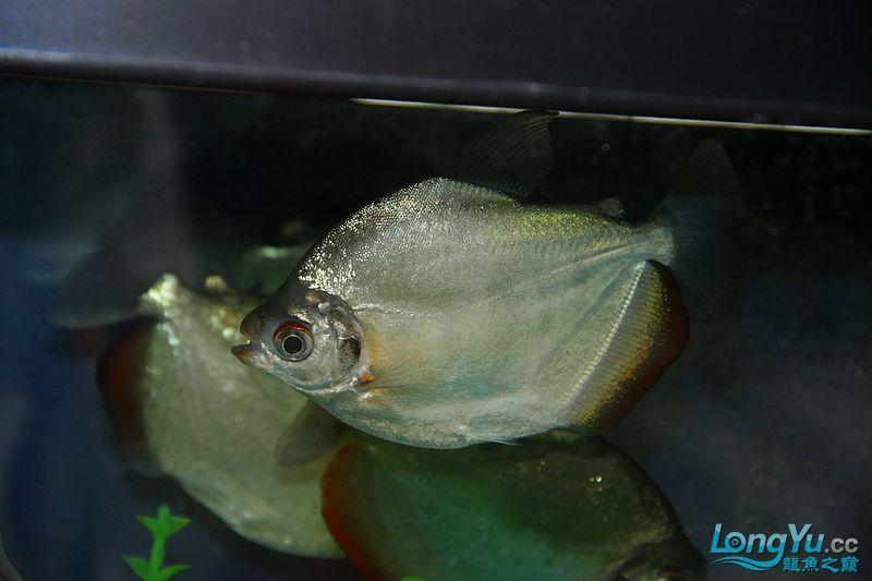 鱼展(3)