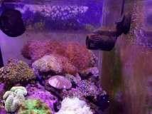 【摄影美图】珊瑚