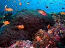 【摄影美图】珊瑚和鱼