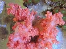 收了几个珊瑚