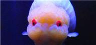 金鱼饲养六大要诀