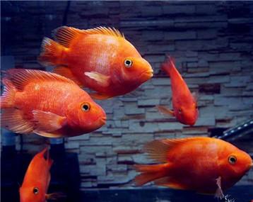 新手报道,养鱼为了更好的把心静下来