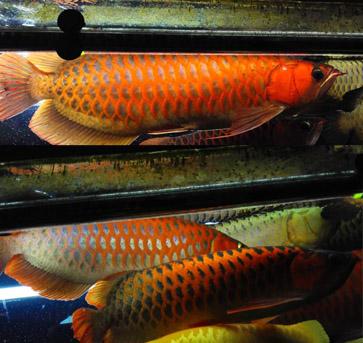 自己家的鱼VS别人家的鱼