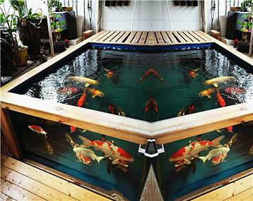兴之所至,再晒晒客厅陶瓷金鱼缸和阳台锦鲤地缸