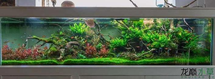 [转]分享一个2米大型草缸杜鹃根造景[50P]  (01-23)