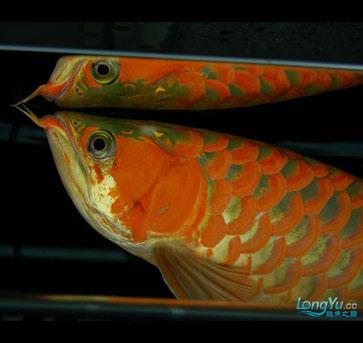 祝鱼友新年快乐!