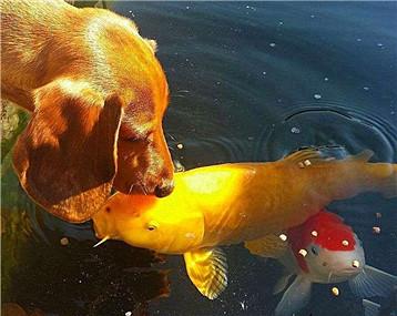一池一狗,也是美到不行
