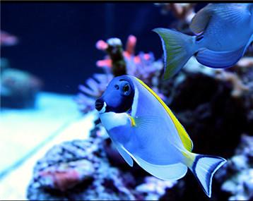 来一波漂亮的鱼!