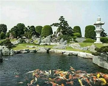 美丽的鱼池和锦鲤