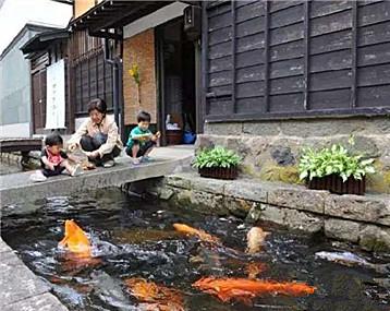一群富贵灵动的锦鲤游活了日本这个美丽乡村