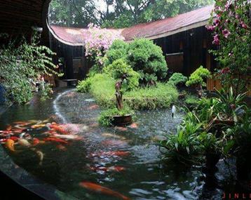雨天里的锦鲤池