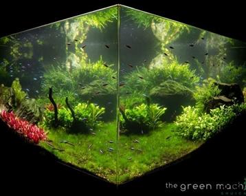 绿色车间150cm大型方形水草缸作品
