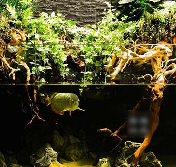 3.6米*1.5米*1米龙鱼水陆缸