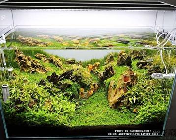 松皮石景缸