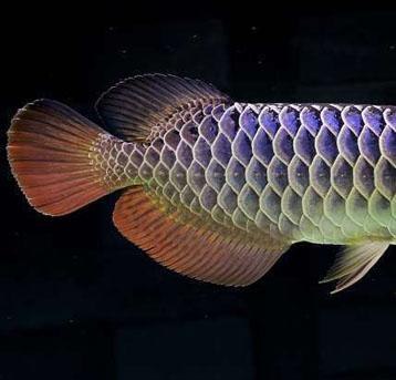 分享我朋友的一条爱鱼