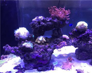 海水缸 二米海水缸 珊瑚