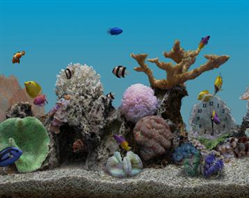 海水缸造景