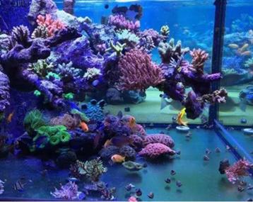 这个海缸有魔性,漂亮极了!