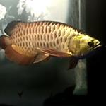 爱鱼爱生活