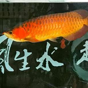 好久没看鱼