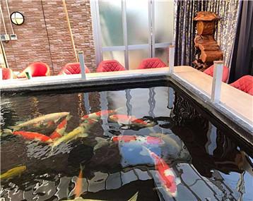分享一个池子,坐赏锦鲤