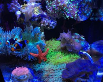喜欢看海水鱼,喜欢看艳丽的珊瑚