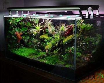 最近收集的雨林缸成景,大家看看