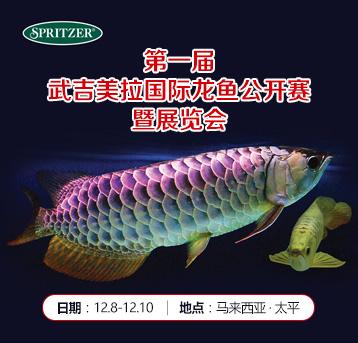 第1届武吉美拉国际龙鱼公开赛结果公布!