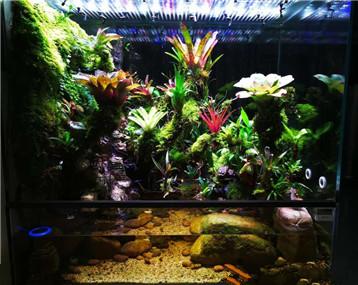 乱花渐欲迷人眼之我的雨林缸【2】——《野渡无人》