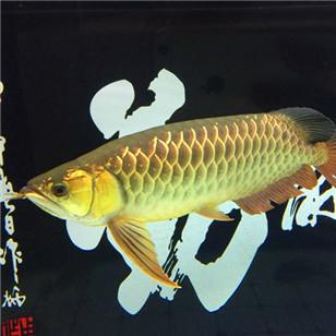 看看这条鱼值两千不?