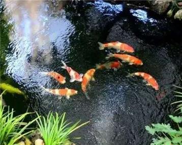 锦鲤鱼池,装点您的庭院