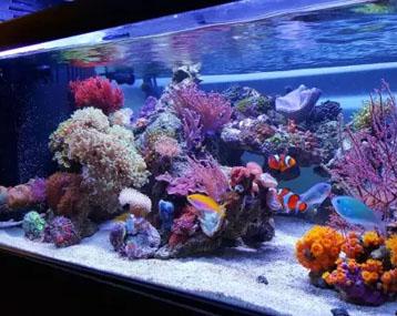 海缸也可以这么美