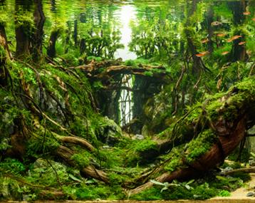 《德鲁依的天梯》——走进森林深处