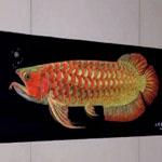 我喜欢这样的红龙鱼