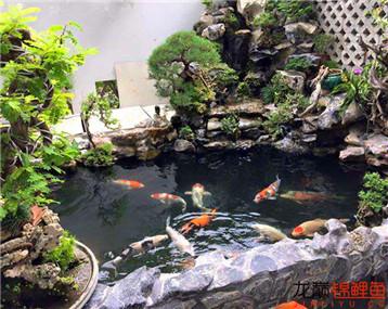 漂亮的鱼池
