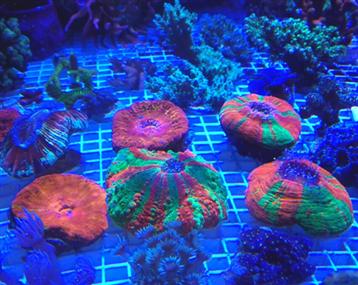珊瑚漂亮且有点小贵