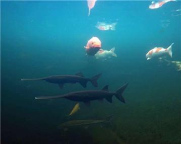这一池好鱼,水下也是别有一番景色!