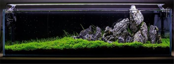 什么牌子的水草泥经济实惠?  (04-19)