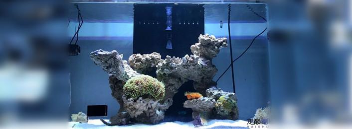 有关鱼缸的造浪问题  (05-20)