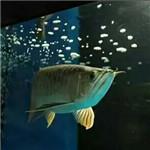 祝各位鱼友这个特殊的节日节日快乐