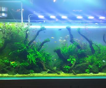魅景·水森林自然水景世界试发一枚